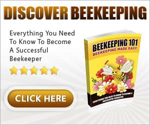 A Beginner Beekeepers Guide